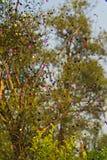 Пестротканая муха confetti в воздухе в природе на зеленой предпосылке в лете Стоковые Изображения RF