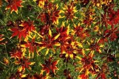 Пестротканая предпосылка стоцветов Стоковые Фото