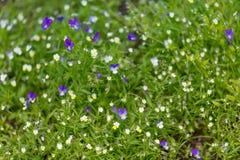 Пестротканая фиолетовая предпосылка фиолет 3-цвета стоковое изображение