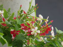 Пестротканое цветя дерево Стоковая Фотография