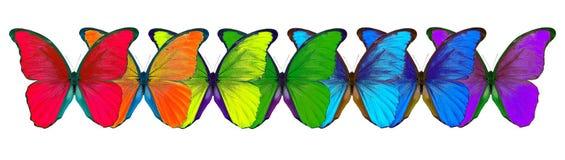 Пестротканые бабочки morpho изолированные на белой предпосылке Стоковые Фотографии RF