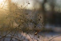 Пестротканые листья осени на дереве Стоковая Фотография