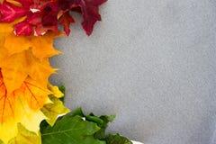 Пестротканые кленовые листы на серой выведенной ткани Стоковые Изображения