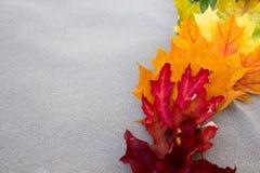 Пестротканые кленовые листы на серой ткани на праве Стоковая Фотография