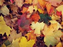Пестротканые листья лежат на том основании в осени Стоковая Фотография