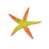 Пестротканые морские звёзды Стоковые Фото