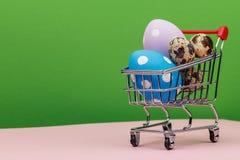Пестротканые пасхальные яйца в вагонетке с космосом для текста Стоковые Изображения RF
