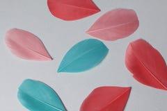 Пестротканые пер птицы других цветов: красный, розовый и зеленый разбросайте на всем поле рамки Стоковое Фото