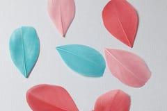Пестротканые пер птицы других цветов: красный, розовый и зеленый разбросайте на всем поле рамки Стоковое Изображение RF