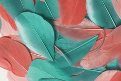Пестротканые пер птицы других цветов: красный, розовый и зеленый разбросайте на всем поле рамки Стоковое Изображение