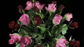 Пестротканые розы в букете вращают на черной предпосылке видеоматериал