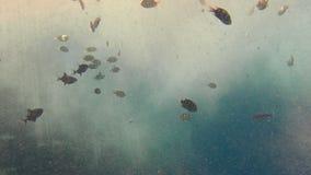 Пестротканые тропические рыбы моря плавая в большом накоплении пузырей газа кислорода растворенных в воде Смогите быть видеоматериал