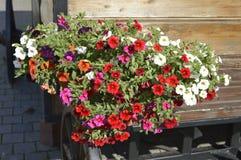 Пестротканые цветки весны, Стоковые Фото