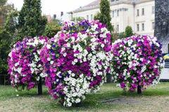 Пестротканые цветки петуньи на flowerbed города Стоковое Фото