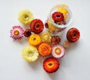 Пестротканые цветки Стоковое Изображение RF