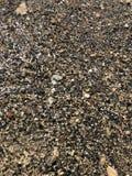 Пестротканый камешек на seashore в прозрачной воде стоковые фото