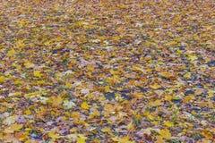 Пестротканый ковер осени листьев клена и дуба стоковое изображение