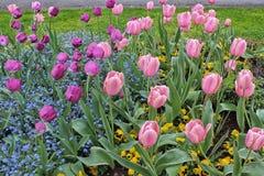 Пестротканый сад с тюльпанами стоковые фотографии rf