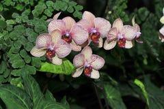 Пестрые орхидеи Стоковое фото RF