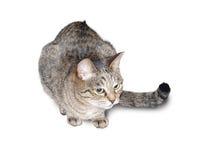 Пестрый кот Стоковые Фотографии RF
