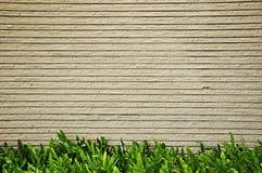 Песчаник и папоротники Стоковая Фотография RF