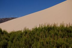 Песчанная дюна и деревья Стоковые Фотографии RF