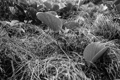 Песчанная дюна засаживает воду Квинсленд Австралию Agnes Стоковые Изображения RF