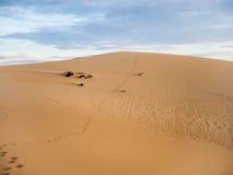 Песчанная дюна пустыни Стоковые Изображения RF