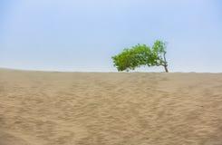 Песчанные дюны держат на одно одиночное сиротливое дерево стоковое фото rf