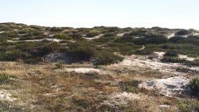 Песчанные дюны и пляж в Paramos, Espinho - Португалии сток-видео