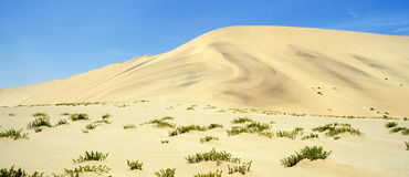 Песчанные дюны Намибии Стоковые Изображения