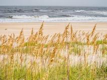Песчанные дюны на побережье океана Стоковые Изображения