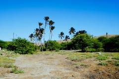 песчанные дюны на пустыне любят остров с пальмами в лагуне рядом с берегом моря стоковое изображение rf