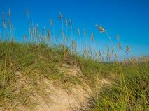 Песчанные дюны на цене океана Стоковое Изображение RF