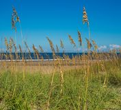 Песчанные дюны на цене океана Стоковые Фото