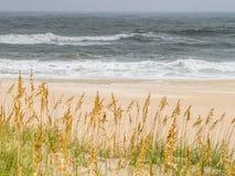 Песчанные дюны на цене океана Стоковая Фотография