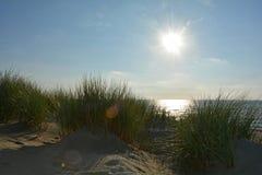 Песчанные дюны с травой дюн на Северном море с солнцем Стоковые Фотографии RF
