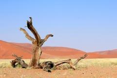 Песчанные дюны Sossusvlei landscape в пустыне Nanib около Sesriem Стоковые Изображения