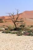 Песчанные дюны Sossusvlei landscape в пустыне Nanib около Sesriem Стоковые Фотографии RF