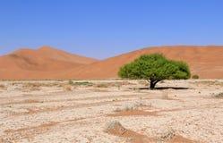 Песчанные дюны Sossusvlei landscape в пустыне Nanib около Sesriem Стоковые Фото