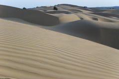 Песчанные дюны в пустыне Раджастхана, Индии Стоковые Фотографии RF
