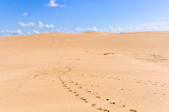 Песчанные дюны в Cabo Polonio, Уругвае Стоковое Изображение