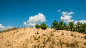 Песчанные дюны заводов Стоковое Изображение RF