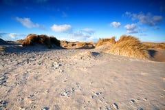 Песчанные дюны на пляже в Ijmuiden, Голландии Стоковая Фотография