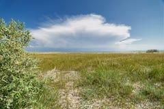 Песчанные дюны на пляже Стоковые Фото