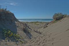 Песчанные дюны с одичалыми succulents в северной калифорния Стоковая Фотография