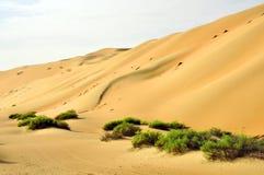 Песчанные дюны Liwa Стоковые Фотографии RF