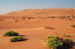 Песчанные дюны Liwa Стоковое Изображение RF