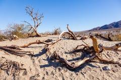 Песчанные дюны Mesquite плоские стоковые фотографии rf
