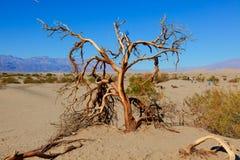 Песчанные дюны Mesquite плоские стоковое фото